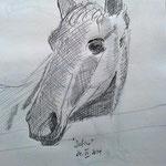 Pferdle 1 (Bleistift, Papier; 42 x 30 cm)