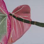Forellenbegonie (Öl/Leinwand, 40 x 60 cm)