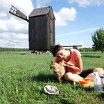 Szene mit Katze und Windmühle. Estland