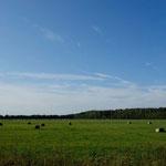 Auf der Insel Muhu, Estland
