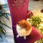 Hundekleidung Kaschmir mit Echtpelzkragen (Fuchs) auf Anfrage