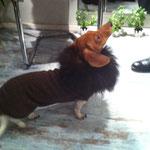 Hundekleidung mit Echtpelzkragen (Wolf), auf Anfrage