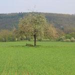 Schmelzer Feld im Frühjahr