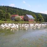 Gänse im Hochwasser der Salzböde (2007)