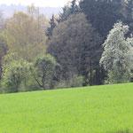 Obstbaumblüte auf dem Schmelzer Feld