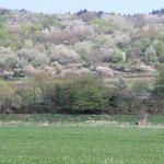 Frühjahrsblüte im Atzelnest Salzböden