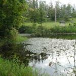 池もありました