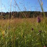 In Mitten der Sommerwiese