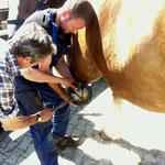 Vorsicht ist geboten, wenn das Pferd den Huf wegziehen will