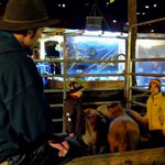 Ein Highlight! Die Kinder dürfen begleitet zu den Schafen