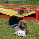 Daisy, Rot und Ylvi am 29.8.2016