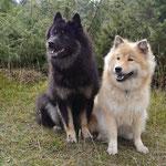 Bakira und Amy