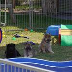 Daica, Ylvi und Daisy am 10.9.2016