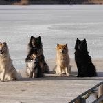 Die Hundmeute am 1.1.2019