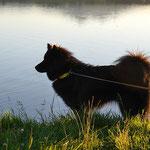 Dana wagt sich in der Abendsonne ins Wasser
