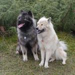 Bayuma und Akita