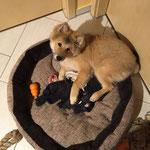 Daisy liebt ihren Korb am 20.11.2016