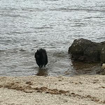 Dana im Meer