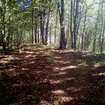 Trail am Abgrund südwestlich des Dachtelfeldes