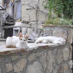 28 Augustus 2017: Ohrid