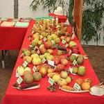 Les Croqueurs de Pommes font oeuvre pédagogique