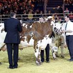 Concours national des vaches de race normande ( 4 années de lactation et plus)