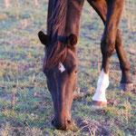 Pferdegerechte Gräser