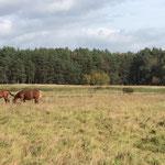 Viel Platz und stabile Herden