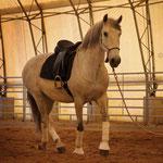 In der Reithalle fühlen sich die Pferde wohl