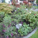 Begleitpflanzen in bestehendes Rosenbeet pflanzen
