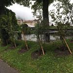 Gemeinschaftsgrab Wengen mit Wildhecke begrünen