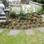 Sommerfloor liefern und bepflanzen