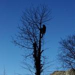 Baum fällen zusammen mit Baumspezialist