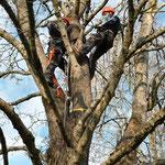 Weiterbildung Kurs Sicherheit an kleinen Bäumen