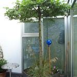 Innenhofbepflanzung im Trog