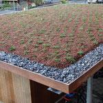 Carport begrünen mit extensiven Pflanzen