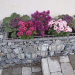 Steinkorb erstellen und bepflanzen