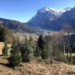 Wiederaufforstung Männlichenbahn Grindelwald