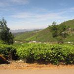 Tee Anbaugebiet im Hochland von Kandy