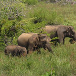 Yala Nationalpark