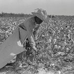 Cotton Picker: Near Pine Bluff, Arkansas by Russell Lea: Farm Security Administration