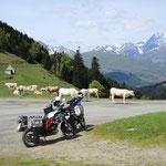 Col de Aspin - da wir jetzt schon das 3. mal dort sind, können wir behaupten, die Kühe stehen immer dort...