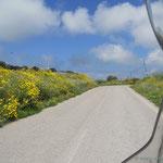 wunderschöne Sträßchen Richtung Norden zum Capo del Falcone