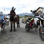 welches Moped ist schöner...?