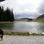 auf der Teichalm in der Steiermark