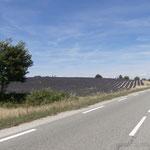Lavendenfelder bei Valensole