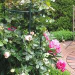 Bauerngarten Ferienwohnung Gartenidylle Ostfriesland Leer