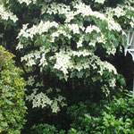 Garten Ferienwohnung Gartenidylle Ostfriesland Leer