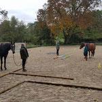 Stage de travail en main - Vers plus de confiance mutuelle et de sécurité dans un environnement nouveau - Gérer l'émotivité du cheval