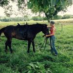 Travail à pied - longe 3,5 m - fin de débourrage jeune cheval - Confiance et décontraction comme bases de travail